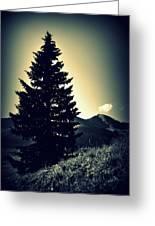 Lone Mountain Pine Greeting Card