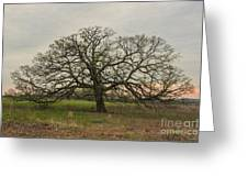 Lone Oak - Spring Greeting Card