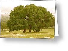 Lone Oaks Greeting Card