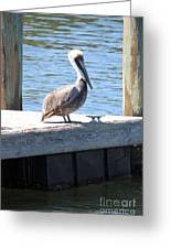 Lone Pelican On Pier Greeting Card