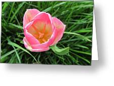 Lone Pink Tulip Greeting Card
