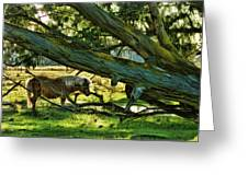 Lone Pony Greeting Card