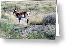 Lone Pronghorn Greeting Card