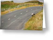 Lone Sheep Greeting Card