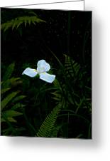 Lone Special Iris Greeting Card