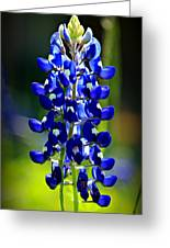 Lone Star Bluebonnet Greeting Card