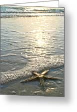 Lone Star On Lovers Key Beach Greeting Card by Olivia Novak