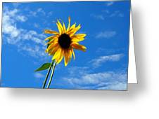Lone Sunflower In A Summer Blue Sky Greeting Card