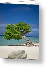 Lone Tree - Aruba Greeting Card