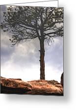 Lone Tree 11351 Greeting Card