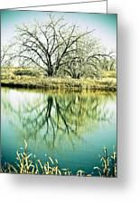 Lone Tree 2 Greeting Card