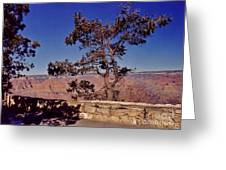 Lone Tree Along The South Rim Greeting Card