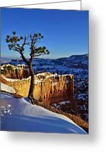 Lone Tree At Bryce Canyon Greeting Card
