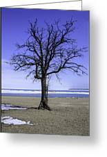 Lone Tree At Fort Gratiot Light House  Greeting Card
