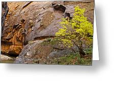 Zion Lone Tree Greeting Card