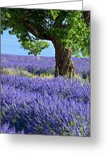 Lone Tree In Lavender Greeting Card
