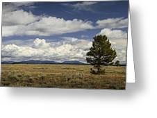 Lone Tree In The Grand Teton National Park Greeting Card