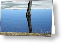 Lone Tree In Water Greeting Card