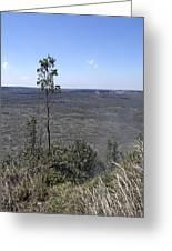 Lone Tree Kilauea Crater Greeting Card