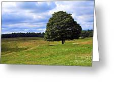 Lone Tree On Grassy Knoll Greeting Card