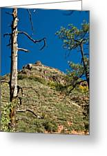 Lone Tree On The Mountain Greeting Card