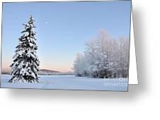 Lone Winter Spruce - Alaska Greeting Card