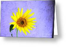 Lone Yellow Daisy Greeting Card