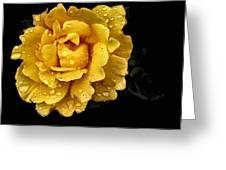 Lone Yellow Rose Greeting Card