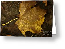 Lonely Autumn Leaf Greeting Card