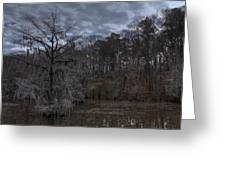 Lonely Bald Cypress Greeting Card