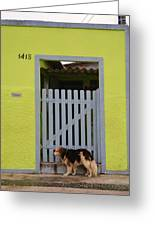 Lonely Cachorro Greeting Card