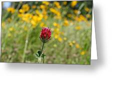 Lonely Clover Greeting Card