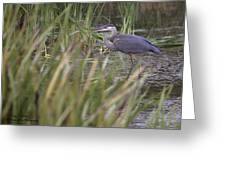 Lonely Heron Greeting Card