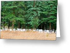 Lonely Graveyard Under Pine Trees Greeting Card