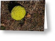 Lonely Hedge Apple Greeting Card