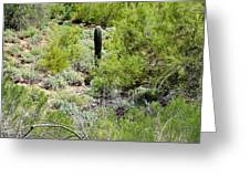 Lonely Little Saguaro Greeting Card