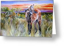 Lonely Lobo Sunset Greeting Card