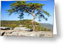 Lonely Lonesome Pine Greeting Card