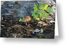 Lonely Mushroom Greeting Card