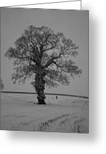 Lonely Oak Greeting Card