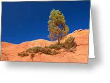 Lonely Pine On The Ocher Hill Greeting Card