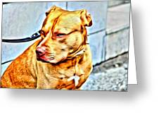 Lonely Pit Bull Greeting Card