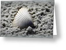 Lonely Shell Greeting Card