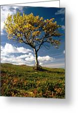 Lonely Tree In Mountain Greeting Card