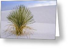 Lonely Yucca Plant In White Sands Greeting Card