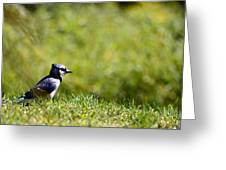 Lonesome And Blue Greeting Card