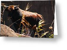 Lonesome Bull Greeting Card