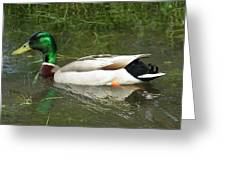 Lonesome Duck Greeting Card