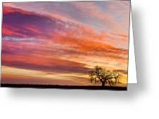 Lonesome Tree Sunrise Greeting Card