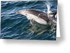 Long-beaked Common Dolphin Porpoising Greeting Card